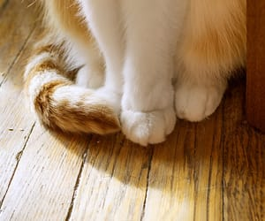 cat paws, lovely, and meow image