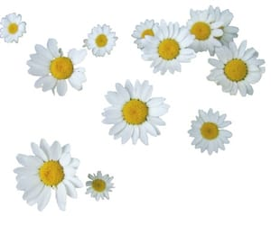 art, daisies, and flowers image