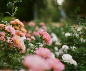 35mm camera, flowers, and analog camera image