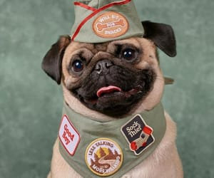 adorable, animals, and badges image