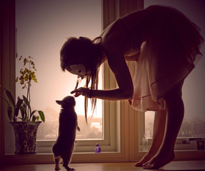 girl, rabbit, and cat image