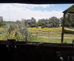 animals, countryside, and grass image