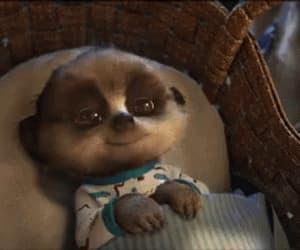 gif and baby meerkat oleg image