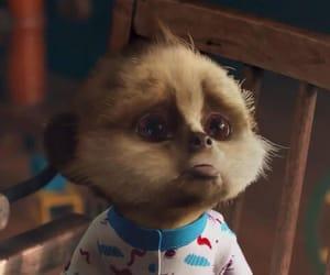 baby meerkat oleg image