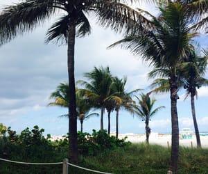 beach, palm trees, and Miami image