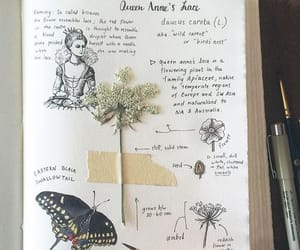 art journal, drawing, and herbs image