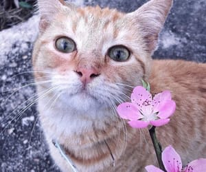 beautiful, cat, and flowers image