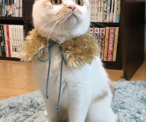 Animales, manga, and gato image