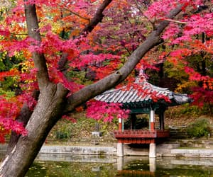 autumn, travel, and southkorea image