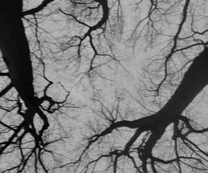 b&w, dark, and grey image