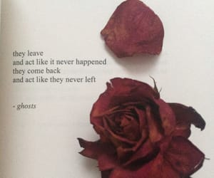 book, quote, and roses image