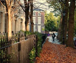 autumn, fall, and ny image