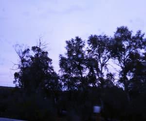 nature, rain, and tree image