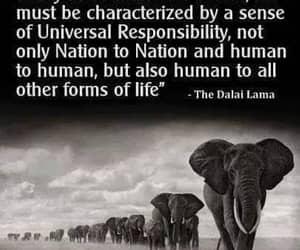 dalai lama and universal responsibility image