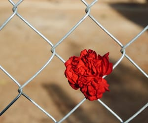 carnation, desert, and fence image