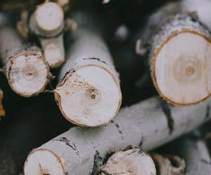 wood, photography, and winter image
