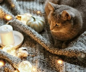cat, autumn, and christmas image