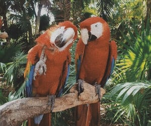 parrot, aesthetic, and tropical image