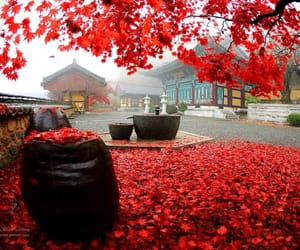 autumn, korea, and Temple image