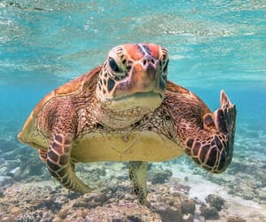 animal, turtle, and nature image