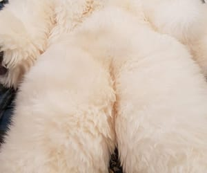 fluffy, furry, and fuzzy image