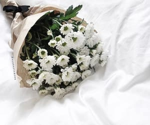 flowers, nature, and white flowers image