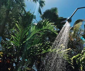 nature, shower, and summer image