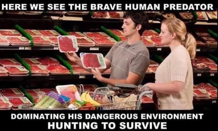 animal, vegan, and animals image