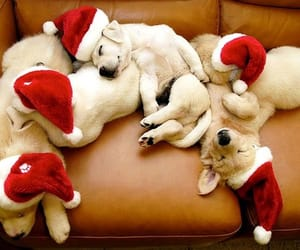 The santa claus has these christmas little helpers with him❤️❤️