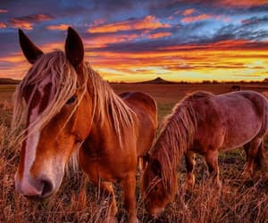 animal, caballos, and salvaje image