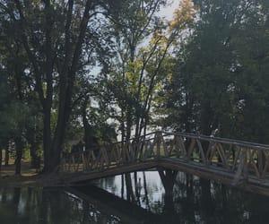 bridge, feed, and green image