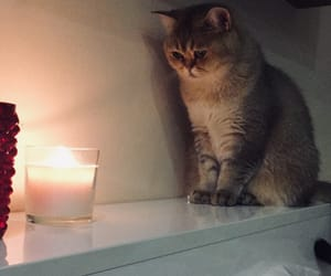 babe, candle, and cat image