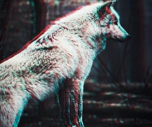 Image by Valewolf