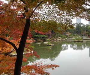 autumn, autumn leaves, and city image