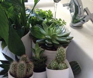 cactus, wather, and green image