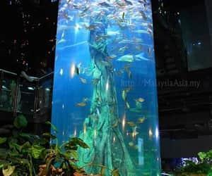 aquarium, fish, and sea image
