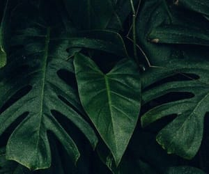 green, dark, and plants image