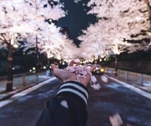 flowers, pink, and sakura image
