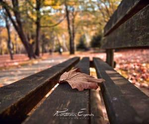 fall and konstantinos evgenidis image