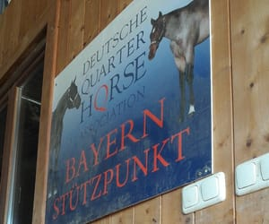 equestrian, equitation, and germany image
