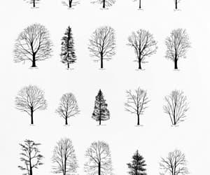arvores, Desenhos, and naturesa image