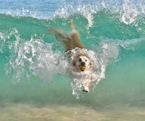dog, water, and love image