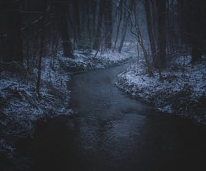 winter, forest, and river image