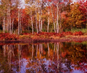 autumn colors, forest, and massachusetts image