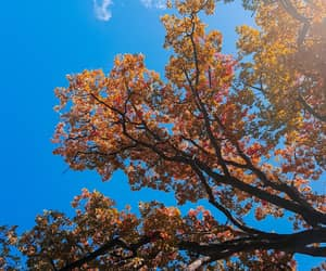 autumn, firstpost, and colours image