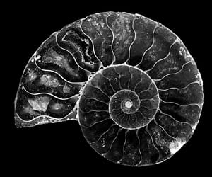 black and white, close up, and extinct image
