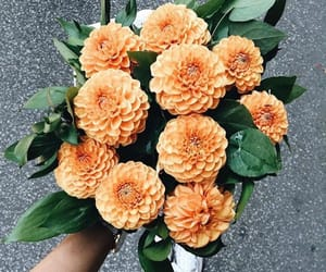 beautiful, flowers, and cute image
