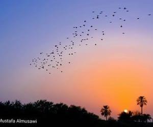 حُبْ, كلمات, and بصره image