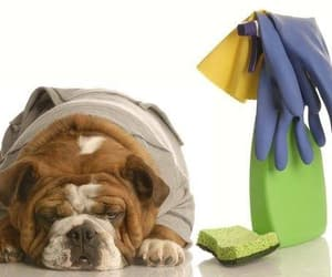 house cleaning services image