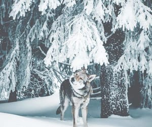 dog, white, and winter image